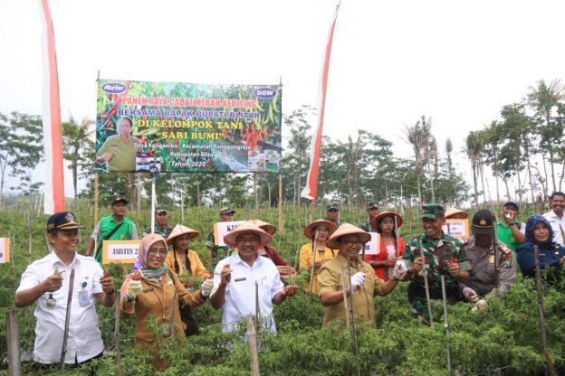 Bupati Rijanto Resmikan Embung dan Panen Cabai Keriting di Desa Kaligambir